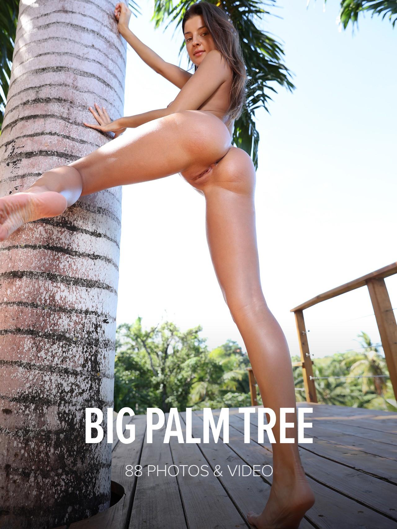 Maria: Big Palm Tree