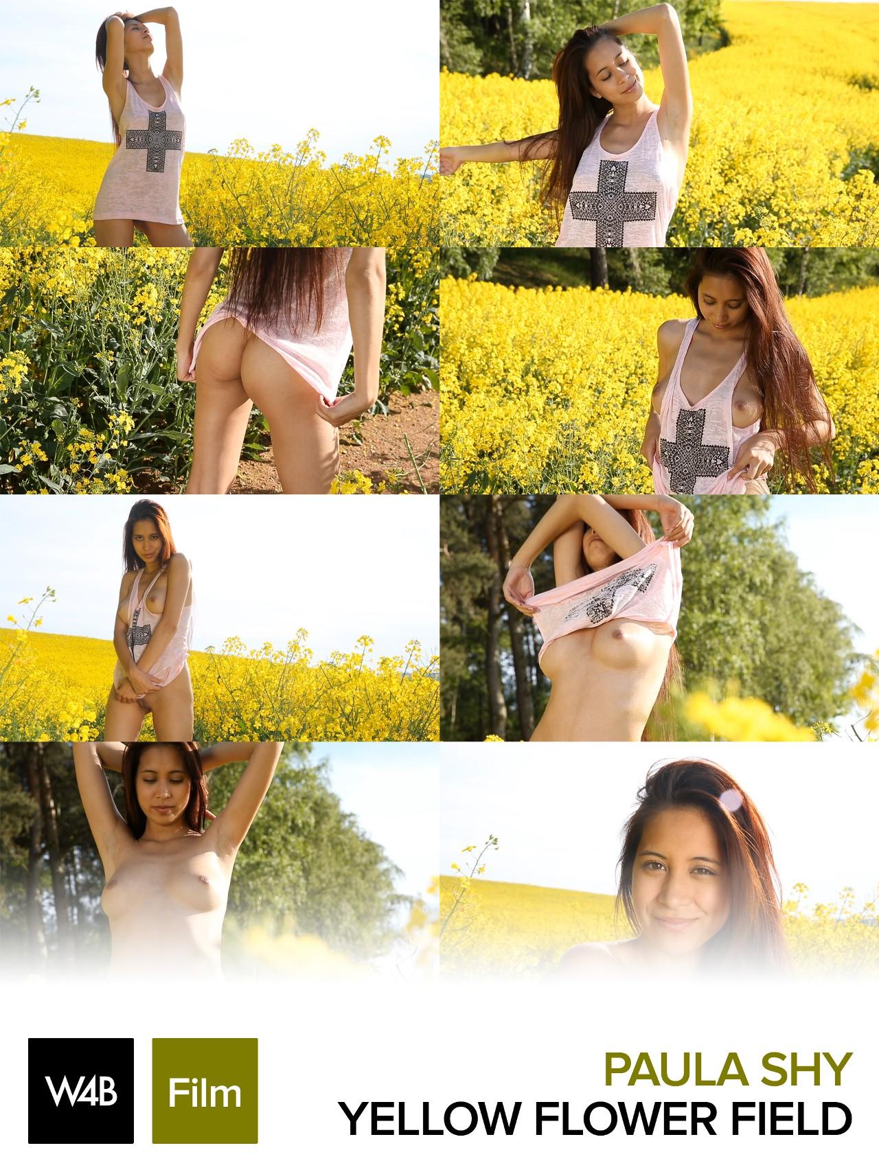 Paula Shy: Yellow flower field